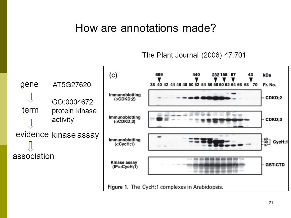 21 term evidence association gene How are annotations made.