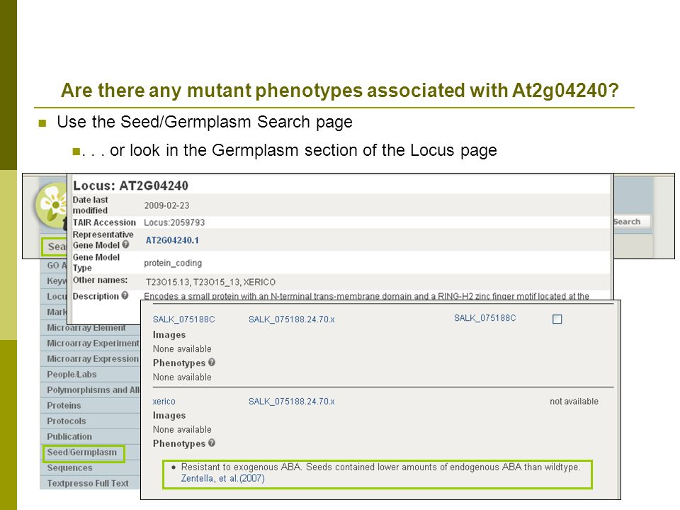 Are there any mutant phenotypes associated with At2g04240.