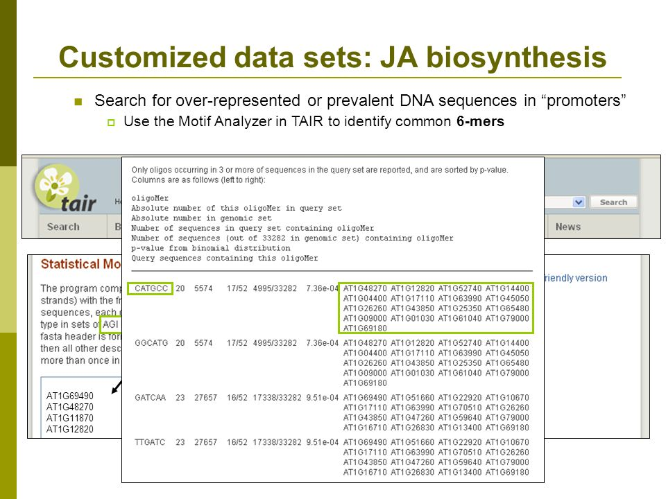 Customized data sets: JA biosynthesis Search for over-represented or prevalent DNA sequences in promoters Use the Motif Analyzer in TAIR to identify common 6-mers AT1G69490 AT1G48270 AT1G11870 AT1G12820