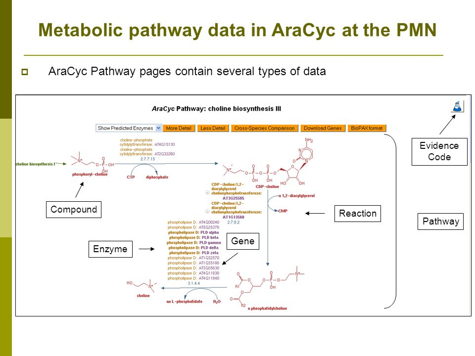 Pathway Enzyme Gene Reaction Compound Evidence Code AraCyc Pathway pages contain several types of data Metabolic pathway data in AraCyc at the PMN