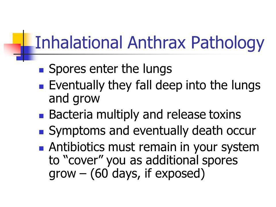 Inhalational Anthrax Pathology Spores enter the lungs Eventually they fall deep into the lungs and grow Bacteria multiply and release toxins Symptoms and eventually death occur Antibiotics must remain in your system to cover you as additional spores grow – (60 days, if exposed)