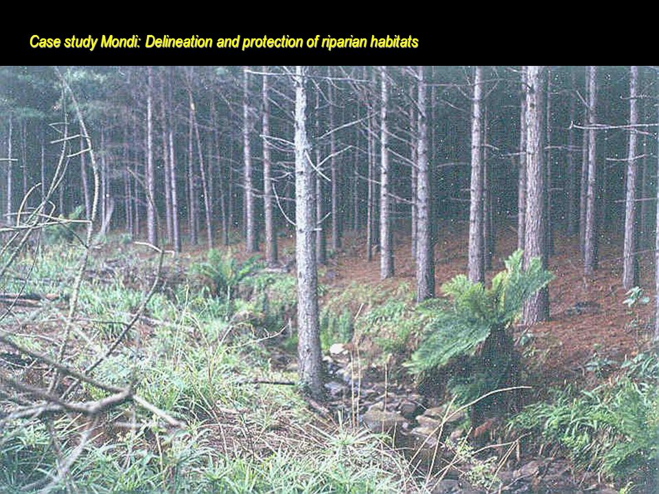 World Resources Institute Case study Mondi: Delineation and protection of riparian habitats