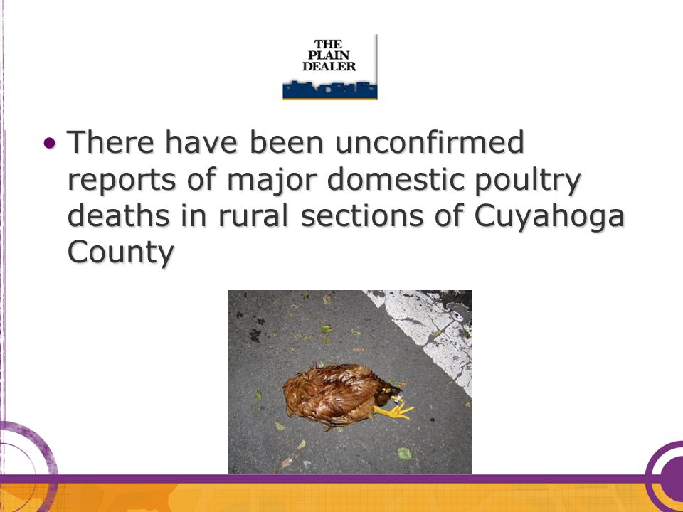 There have been unconfirmed reports of major domestic poultry deaths in rural sections of Cuyahoga CountyThere have been unconfirmed reports of major domestic poultry deaths in rural sections of Cuyahoga County