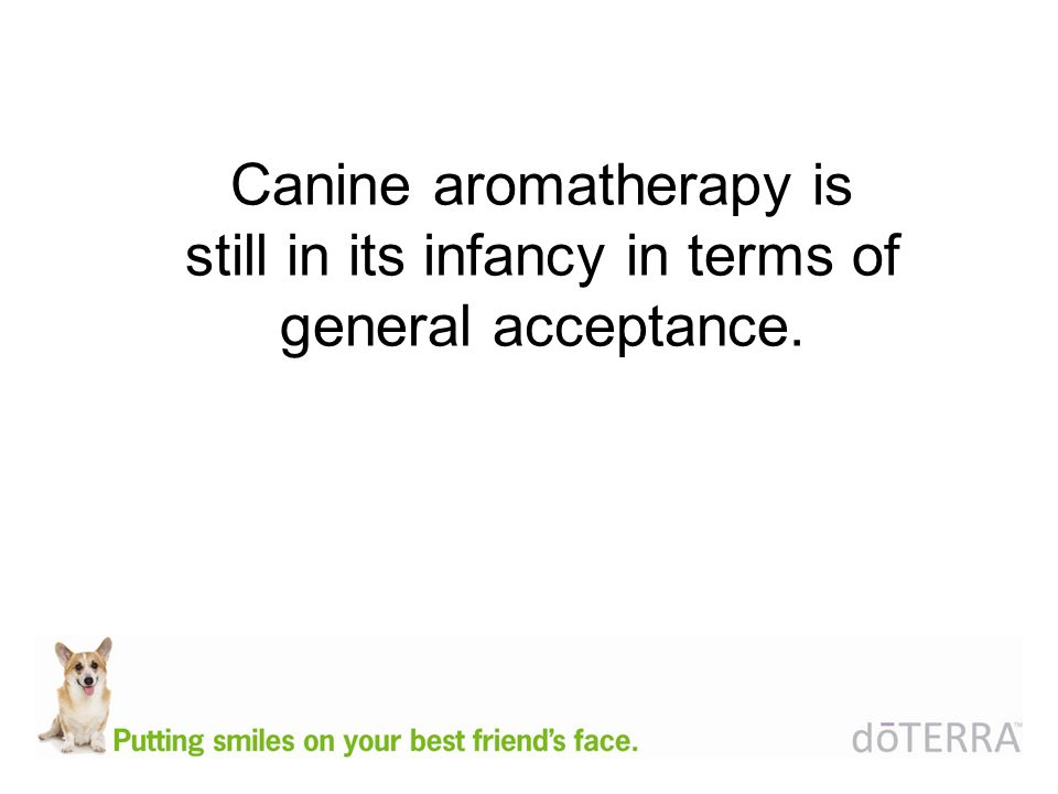 Canine aromatherapy is still in its infancy in terms of general acceptance.