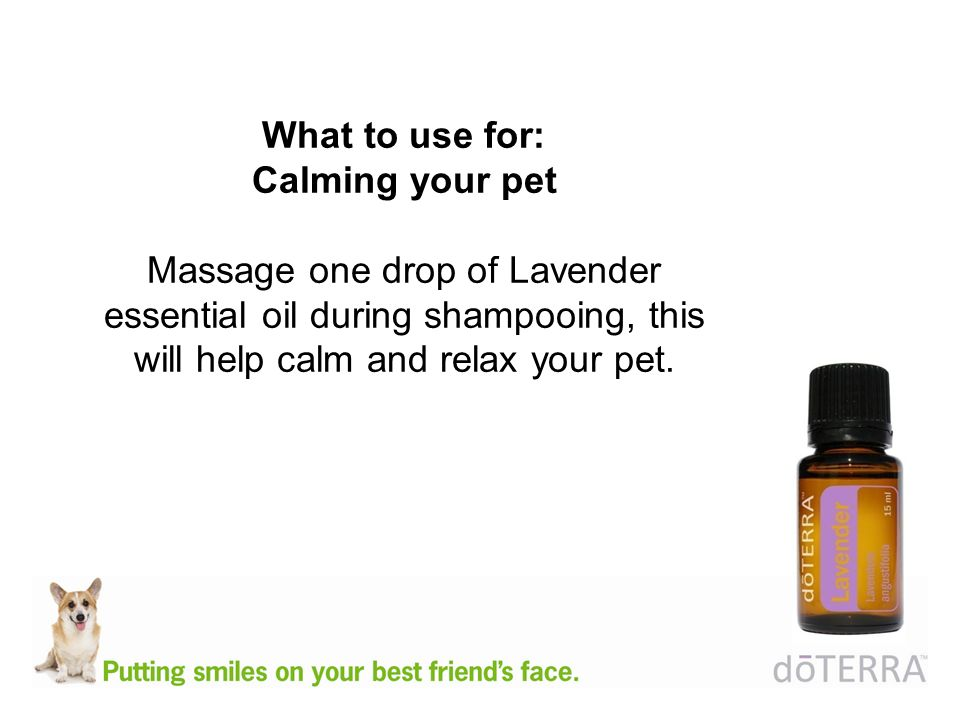 What to use for: Calming your pet Massage one drop of Lavender essential oil during shampooing, this will help calm and relax your pet.