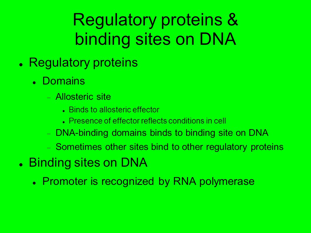 Regulatory proteins & binding sites on DNA Regulatory proteins Domains Allosteric site Binds to allosteric effector Presence of effector reflects conditions in cell DNA-binding domains binds to binding site on DNA Sometimes other sites bind to other regulatory proteins Binding sites on DNA Promoter is recognized by RNA polymerase