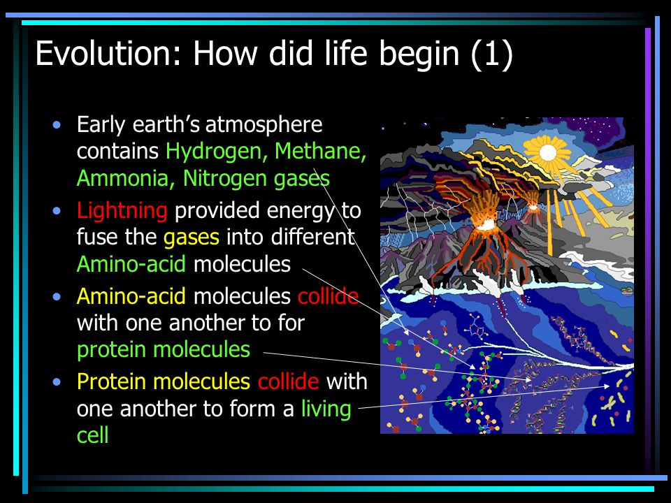 Evolution: How did life begin (1) Early earths atmosphere contains Hydrogen, Methane, Ammonia, Nitrogen gases Lightning provided energy to fuse the gases into different Amino-acid molecules Amino-acid molecules collide with one another to for protein molecules Protein molecules collide with one another to form a living cell