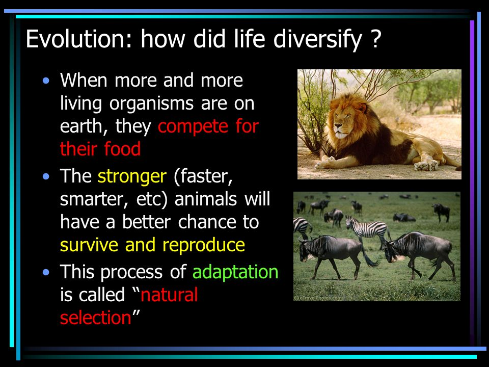 Evolution: how did life diversify .