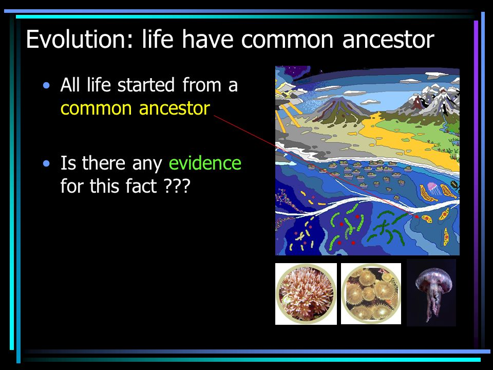 Evolution: life have common ancestor All life started from a common ancestor Is there any evidence for this fact