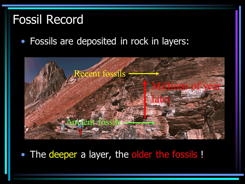 Fossil Record Fossils are deposited in rock in layers: The deeper a layer, the older the fossils .