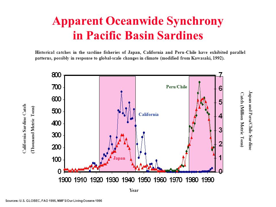 Apparent Oceanwide Synchrony in Pacific Basin Sardines Historical catches in the sardine fisheries of Japan, California and Peru-Chile have exhibited parallel patterns, possibly in response to global-scale changes in climate (modified from Kawasaki, 1992).
