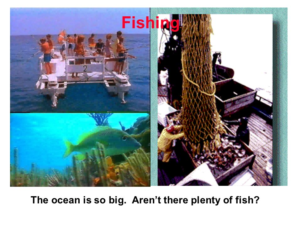 The ocean is so big. Arent there plenty of fish Fishing