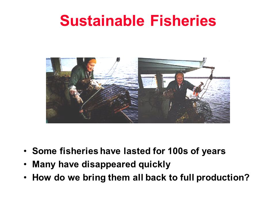 Sustainable Fisheries Some fisheries have lasted for 100s of years Many have disappeared quickly How do we bring them all back to full production