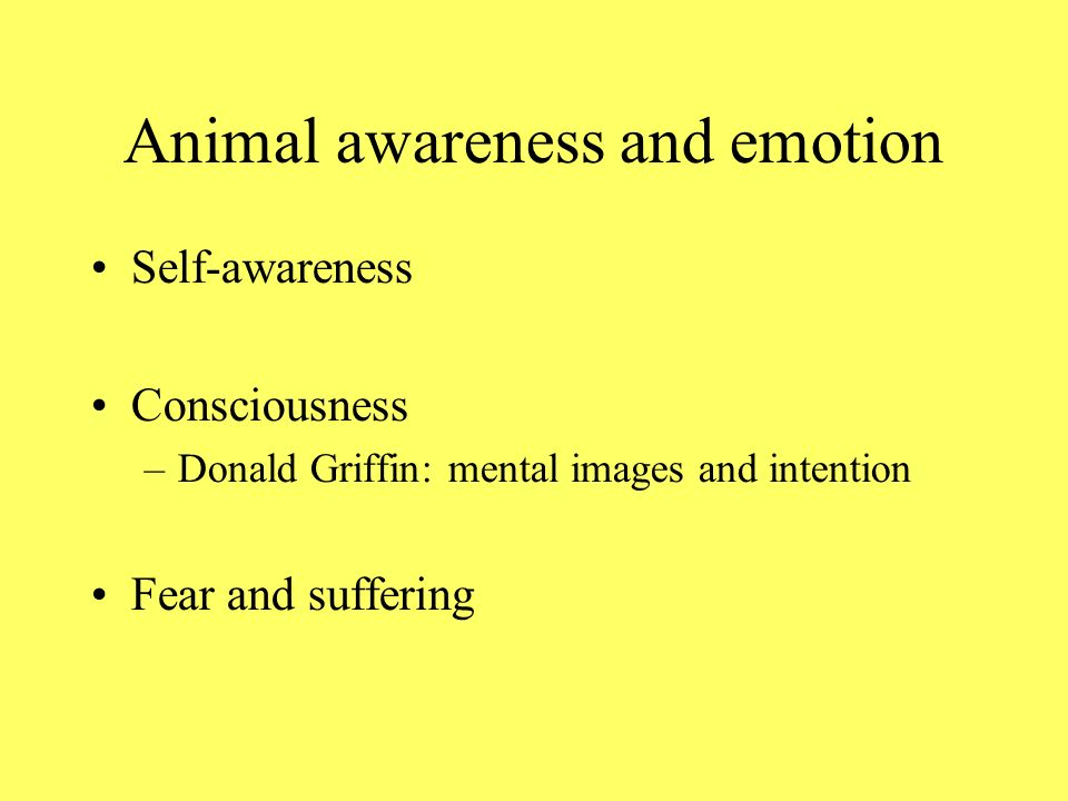 Animal awareness and emotion Self-awareness Consciousness –Donald Griffin: mental images and intention Fear and suffering