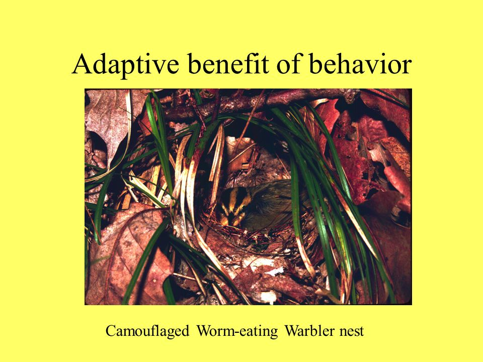 Adaptive benefit of behavior Camouflaged Worm-eating Warbler nest