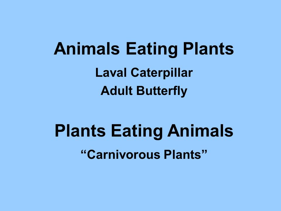 Animals Eating Plants Laval Caterpillar Adult Butterfly Plants Eating Animals Carnivorous Plants