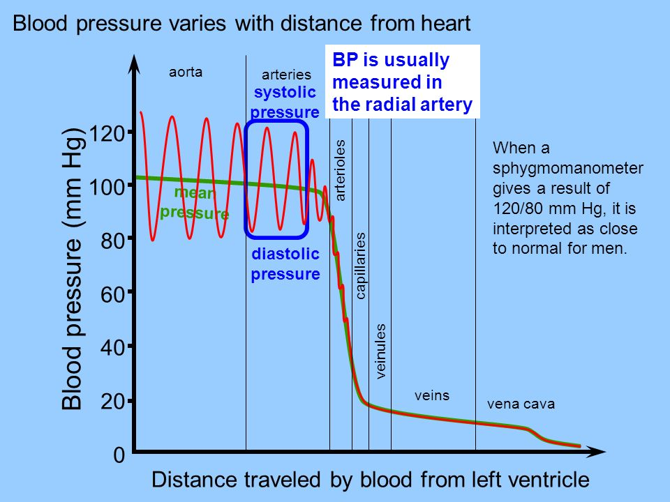 Blood pressure varies with distance from heart mean pressure 120 100 80 60 40 20 0 Distance traveled by blood from left ventricle aorta arteries arterioles capillaries veinules veins vena cava systolic pressure diastolic pressure Blood pressure (mm Hg) BP is usually measured in the radial artery When a sphygmomanometer gives a result of 120/80 mm Hg, it is interpreted as close to normal for men.