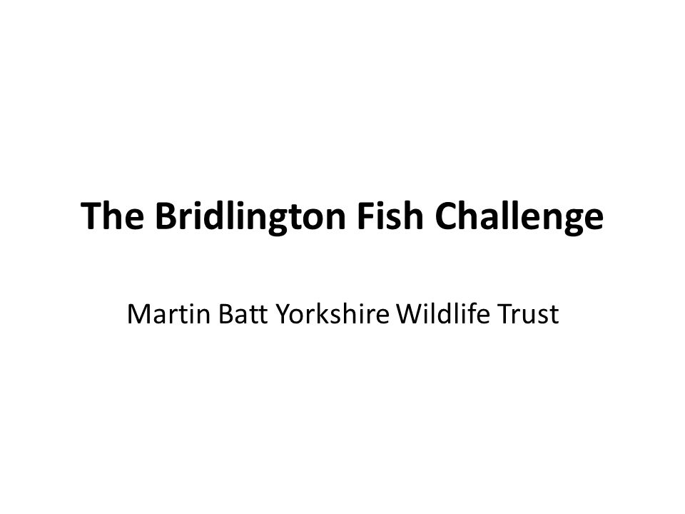 The Bridlington Fish Challenge Martin Batt Yorkshire Wildlife Trust