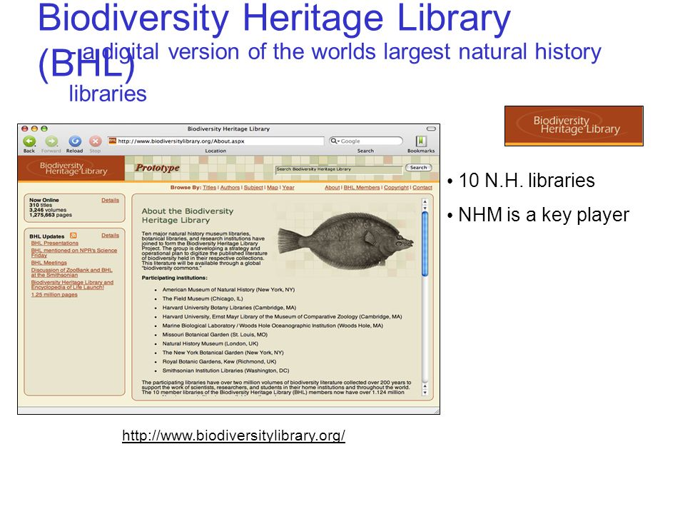 Biodiversity Heritage Library (BHL) - a digital version of the worlds largest natural history libraries http://www.biodiversitylibrary.org/ 10 N.H.