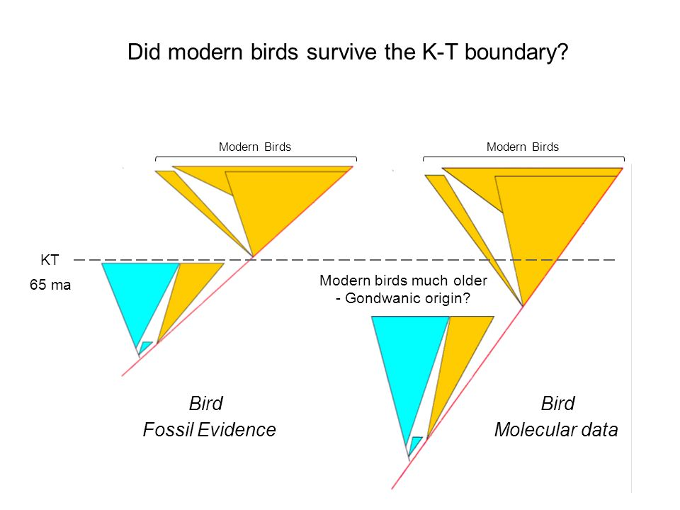 Did modern birds survive the K-T boundary.