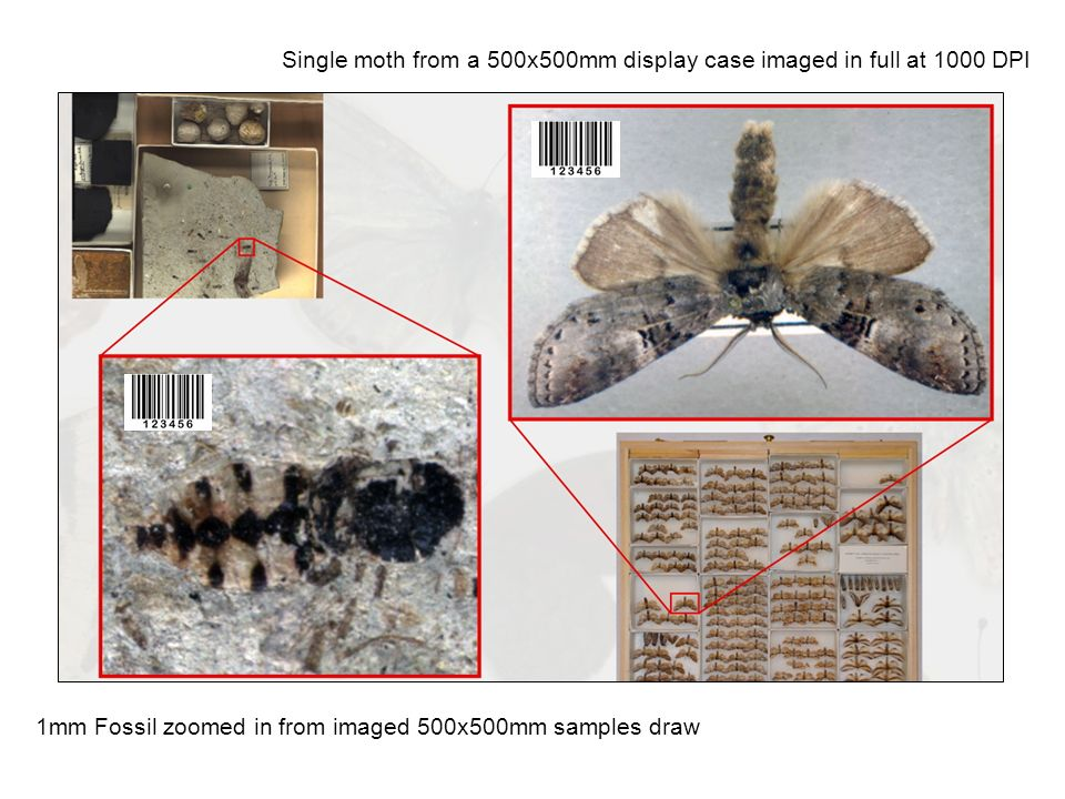 1mm Fossil zoomed in from imaged 500x500mm samples draw Single moth from a 500x500mm display case imaged in full at 1000 DPI