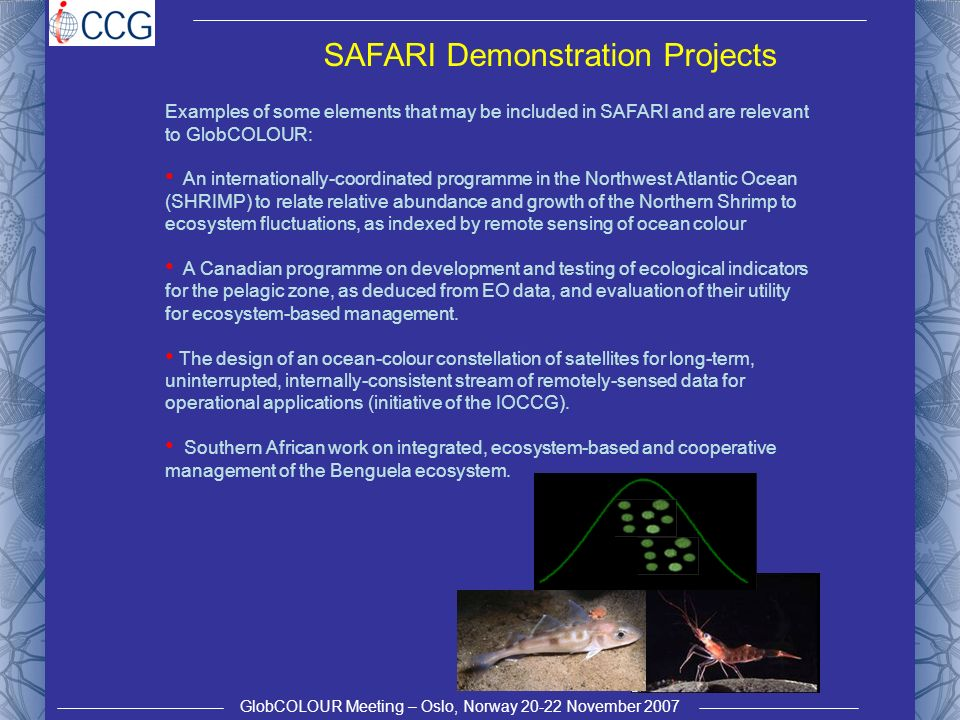 GlobCOLOUR Meeting – Oslo, Norway 20-22 November 2007 SAFARI Demonstration Projects Examples of some elements that may be included in SAFARI and are relevant to GlobCOLOUR: An internationally-coordinated programme in the Northwest Atlantic Ocean (SHRIMP) to relate relative abundance and growth of the Northern Shrimp to ecosystem fluctuations, as indexed by remote sensing of ocean colour A Canadian programme on development and testing of ecological indicators for the pelagic zone, as deduced from EO data, and evaluation of their utility for ecosystem-based management.