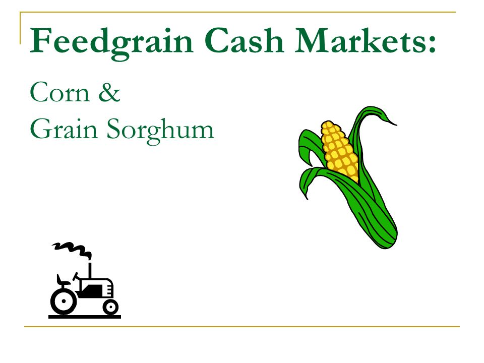 Feedgrain Cash Markets: Corn & Grain Sorghum