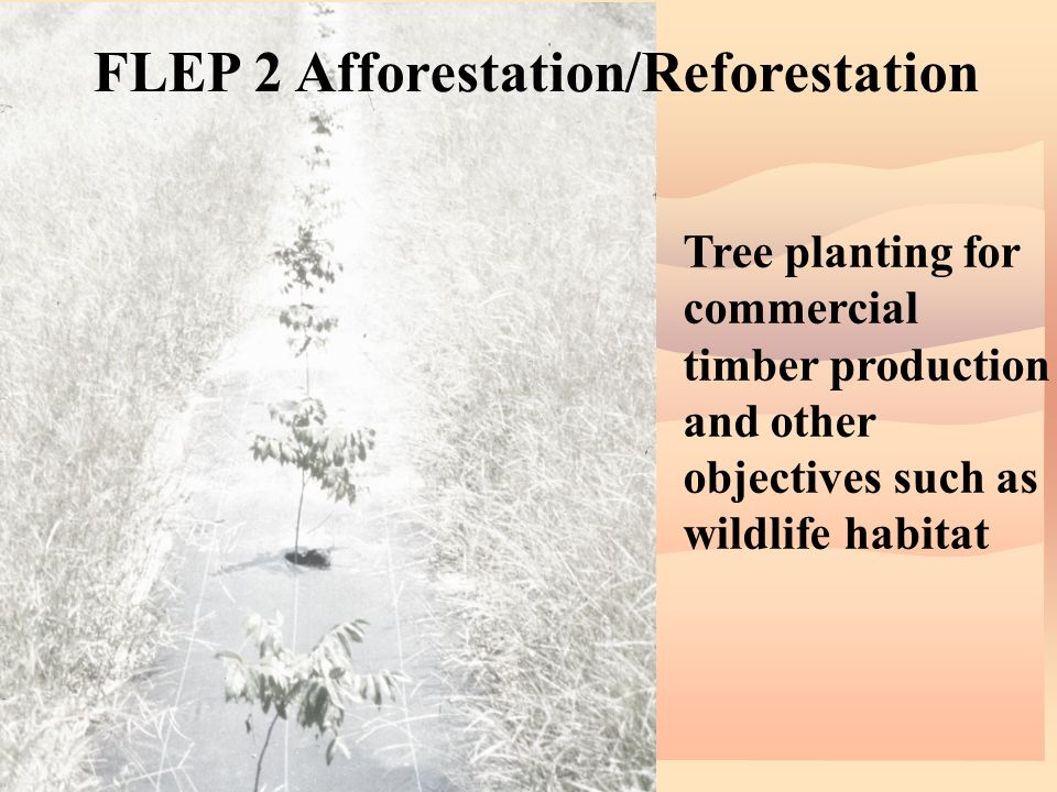 FLEP 2 Afforestation/Reforestation Tree planting for commercial timber production and other objectives such as wildlife habitat
