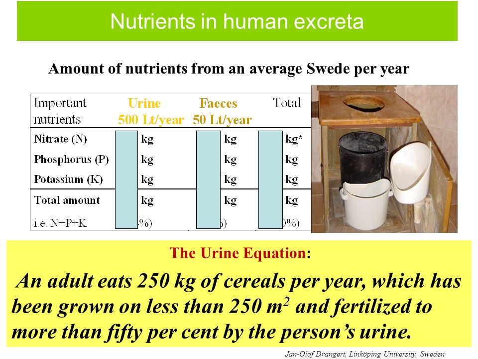 Nutrients in human excreta The Urine Equation: An adult eats 250 kg of cereals per year, which has been grown on less than 250 m 2 and fertilized to more than fifty per cent by the persons urine.