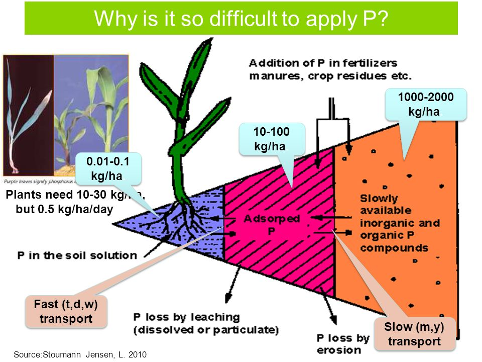 Why is it so difficult to apply P. Plants need 10-30 kg/ha, but 0.5 kg/ha/day 0.01-0.1 kg/ha.