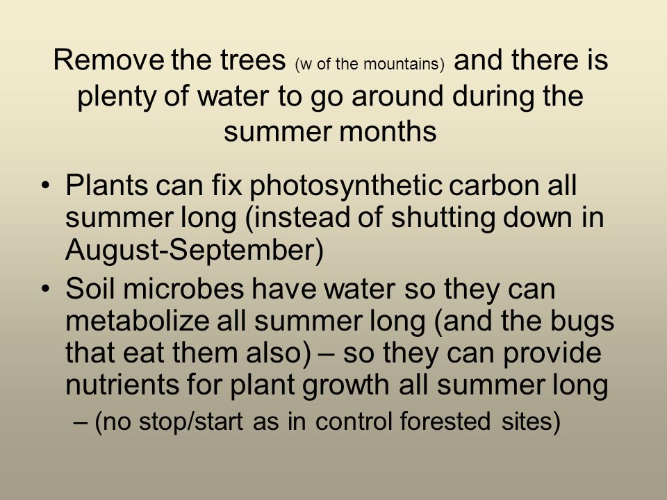 Remove the trees (w of the mountains) and there is plenty of water to go around during the summer months Plants can fix photosynthetic carbon all summer long (instead of shutting down in August-September) Soil microbes have water so they can metabolize all summer long (and the bugs that eat them also) – so they can provide nutrients for plant growth all summer long –(no stop/start as in control forested sites)