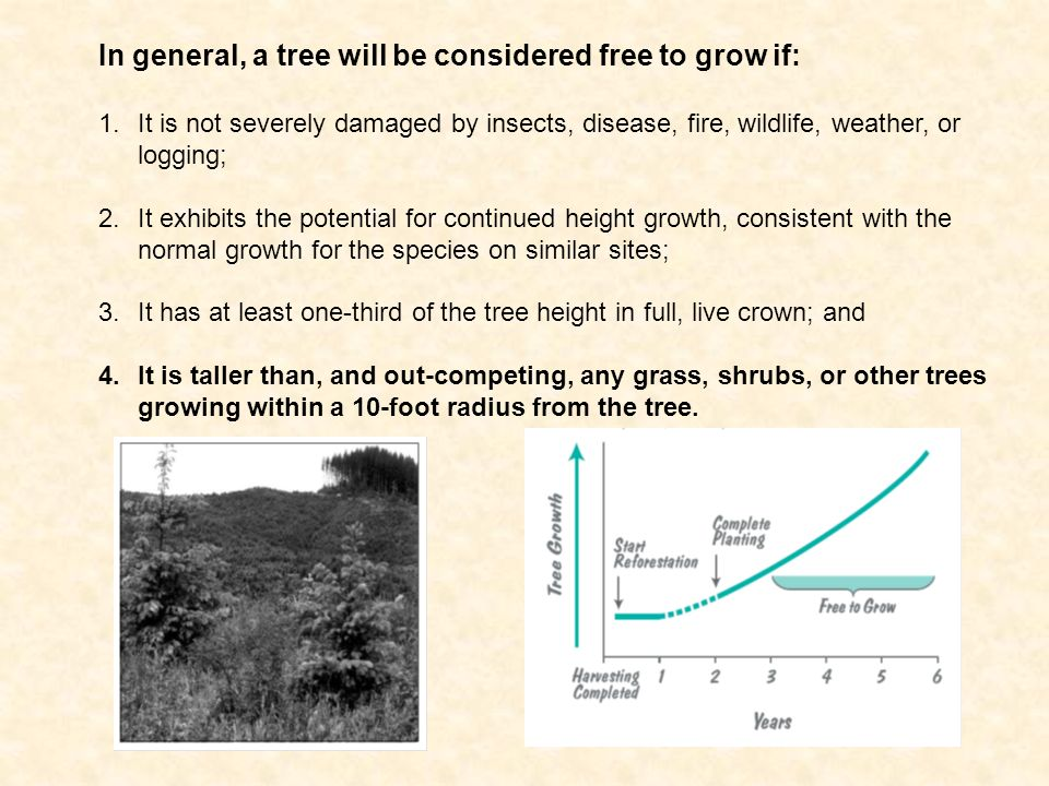 In general, a tree will be considered free to grow if: 1.It is not severely damaged by insects, disease, fire, wildlife, weather, or logging; 2.It exhibits the potential for continued height growth, consistent with the normal growth for the species on similar sites; 3.It has at least one-third of the tree height in full, live crown; and 4.It is taller than, and out-competing, any grass, shrubs, or other trees growing within a 10-foot radius from the tree.