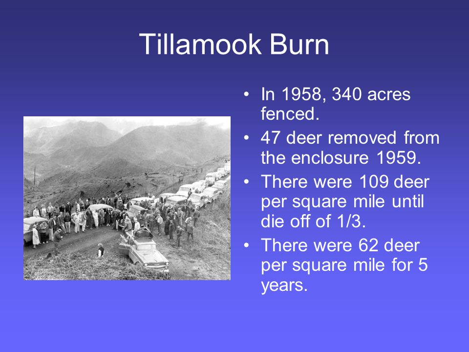 Tillamook Burn In 1958, 340 acres fenced. 47 deer removed from the enclosure 1959.