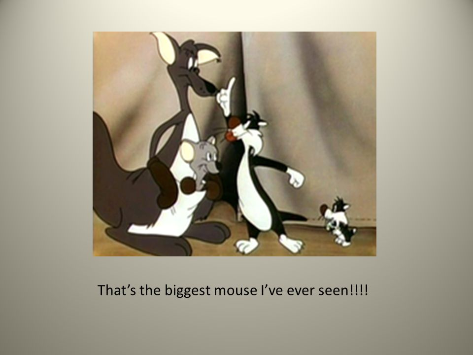 Thats the biggest mouse Ive ever seen!!!!