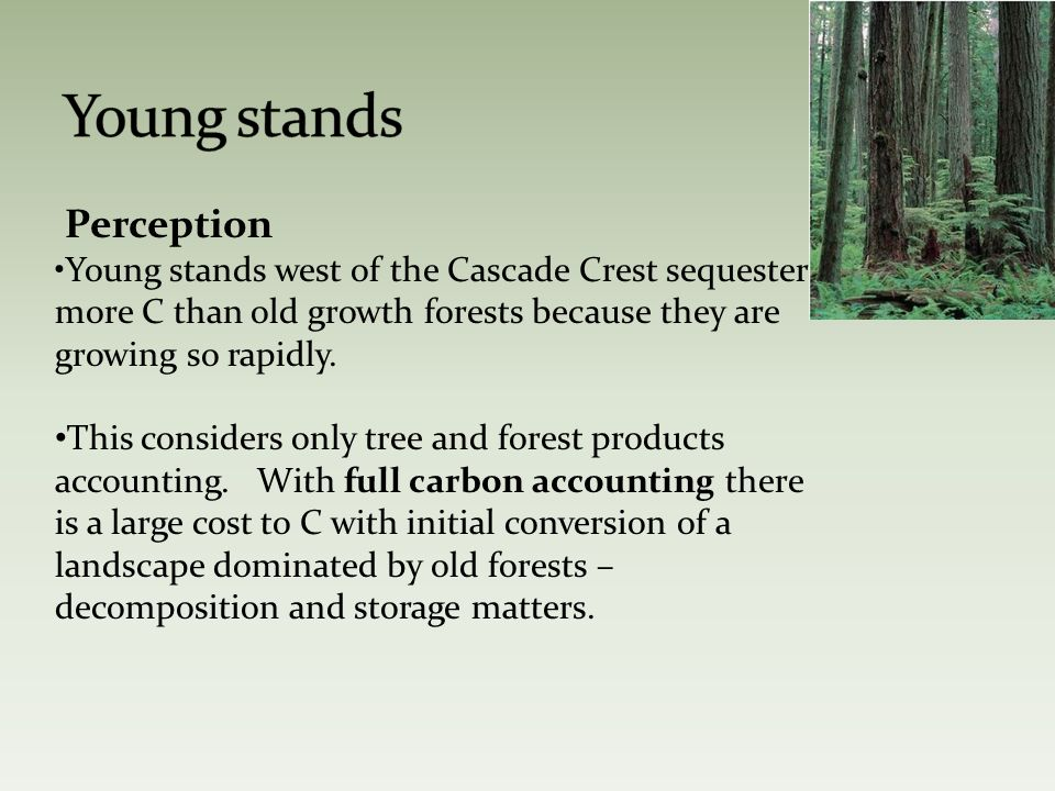 Perception Young stands west of the Cascade Crest sequester more C than old growth forests because they are growing so rapidly.