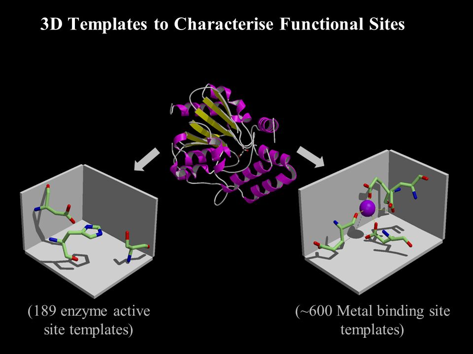 3D Templates to Characterise Functional Sites Template searches (189 enzyme active site templates) (~600 Metal binding site templates)