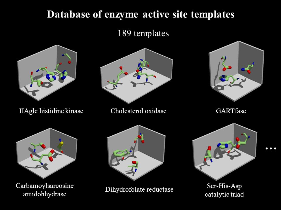 GARTfase Cholesterol oxidase IIAglc histidine kinase Carbamoylsarcosine amidohhydrase Dihydrofolate reductase Ser-His-Asp catalytic triad … Database of enzyme active site templates 189 templates
