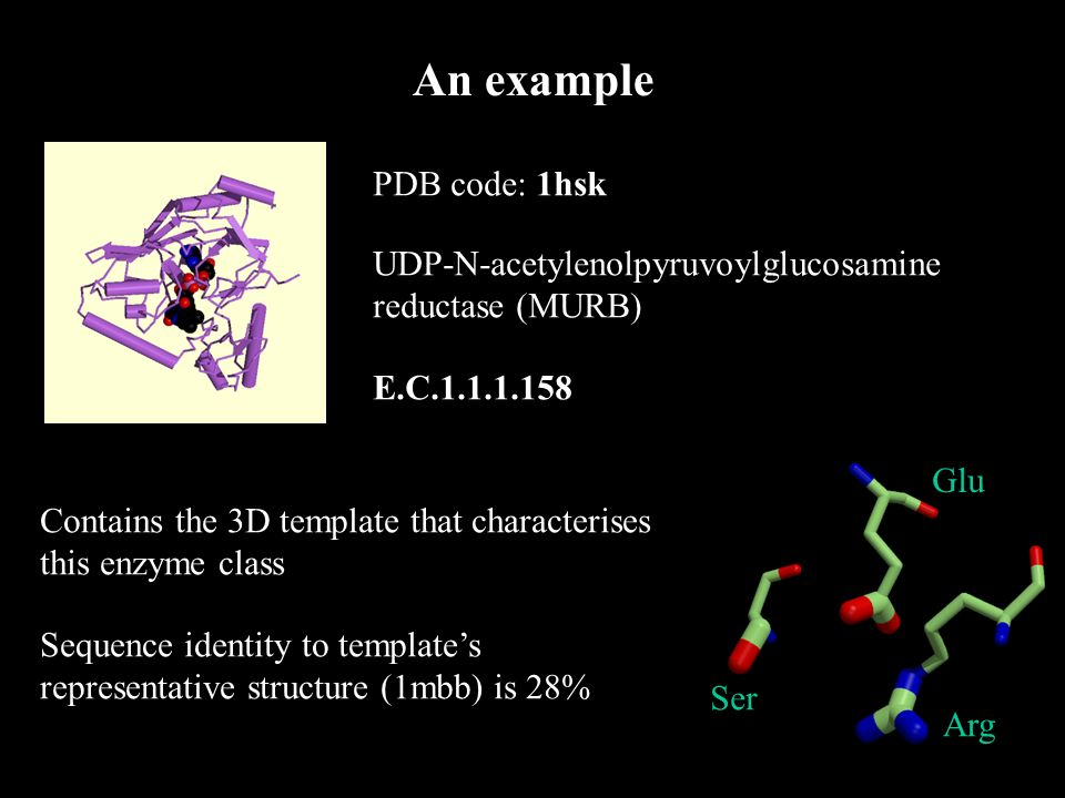 An example PDB code: 1hsk UDP-N-acetylenolpyruvoylglucosamine reductase (MURB) E.C.1.1.1.158 Contains the 3D template that characterises this enzyme class Sequence identity to templates representative structure (1mbb) is 28% Ser Arg Glu