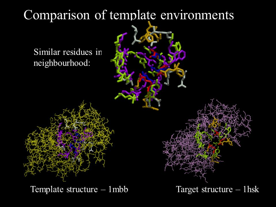 Template structure – 1mbb Comparison of template environments Arg Glu Ser Similar residues in neighbourhood: Target structure – 1hsk