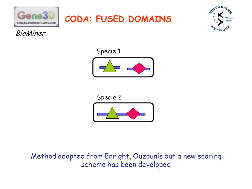 CODA: FUSED DOMAINS Specie 1 Specie 2 Method adapted from Enright, Ouzounis but a new scoring scheme has been developed BioMiner