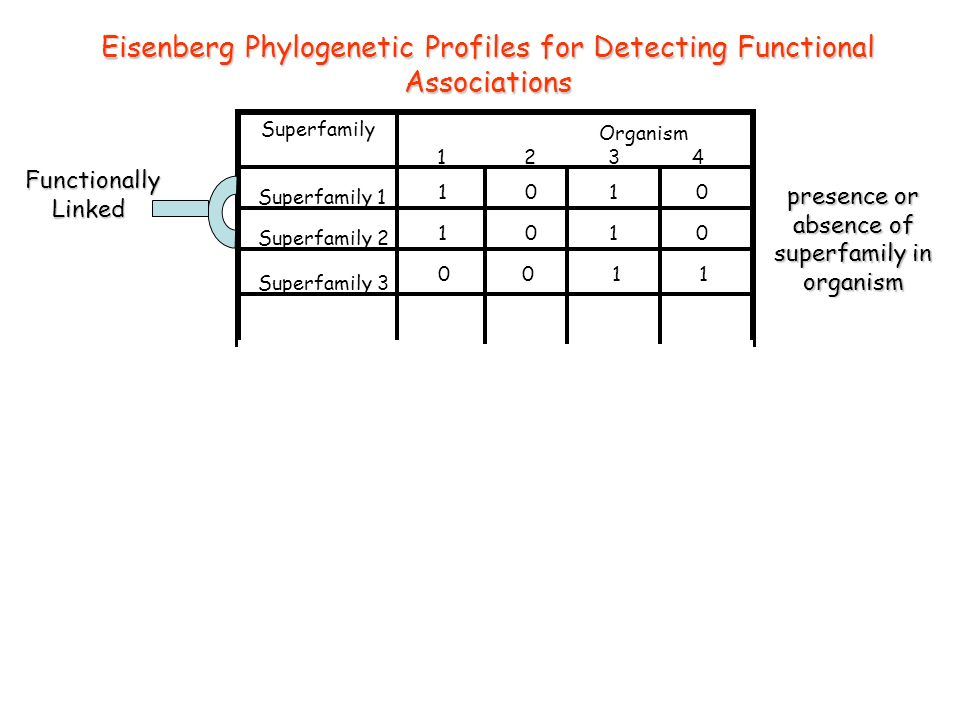 Eisenberg Phylogenetic Profiles for Detecting Functional Associations Superfamily 1 Superfamily 2 Superfamily 3 CATH Domain Superfamily Organism 1 2 3 4 35 0 12 60 12 13 14 11 6 0 0 0 Gene3D Phylogenetic Occurrence Profiles Superfamily 1 Superfamily 2 Superfamily 3 Superfamily Organism 1 2 3 4 1 0 1 0 0 0 1 1 FunctionallyLinked presence or absence of superfamily in organism number of sequence relatives from superfamily in organism