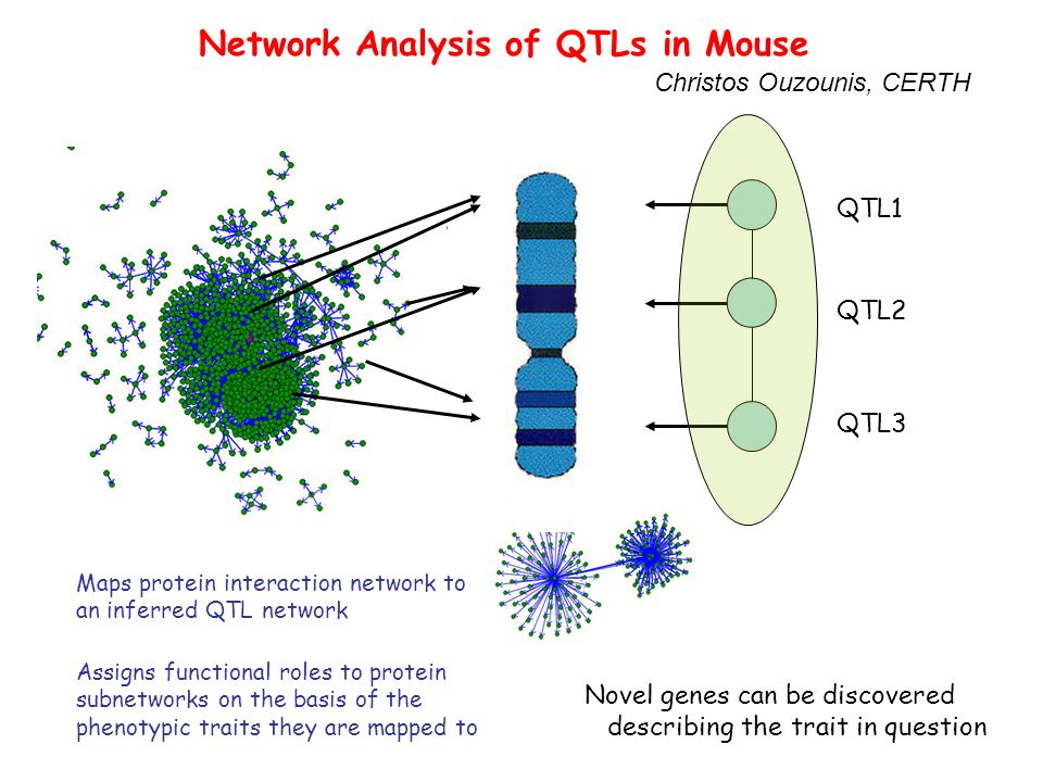 Network Analysis of QTLs in Mouse QTL1 QTL2 QTL3 Novel genes can be discovered describing the trait in question Maps protein interaction network to an inferred QTL network Assigns functional roles to protein subnetworks on the basis of the phenotypic traits they are mapped to Christos Ouzounis, CERTH