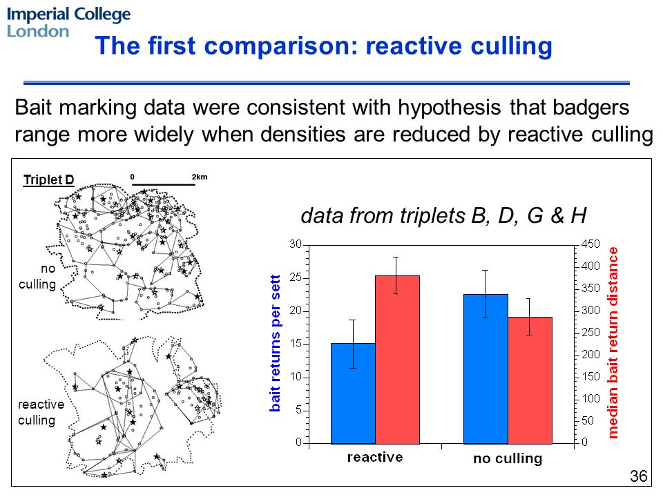 no culling Triplet D The first comparison: reactive culling Bait marking data were consistent with hypothesis that badgers range more widely when densities are reduced by reactive culling data from triplets B, D, G & H reactive culling no culling 36