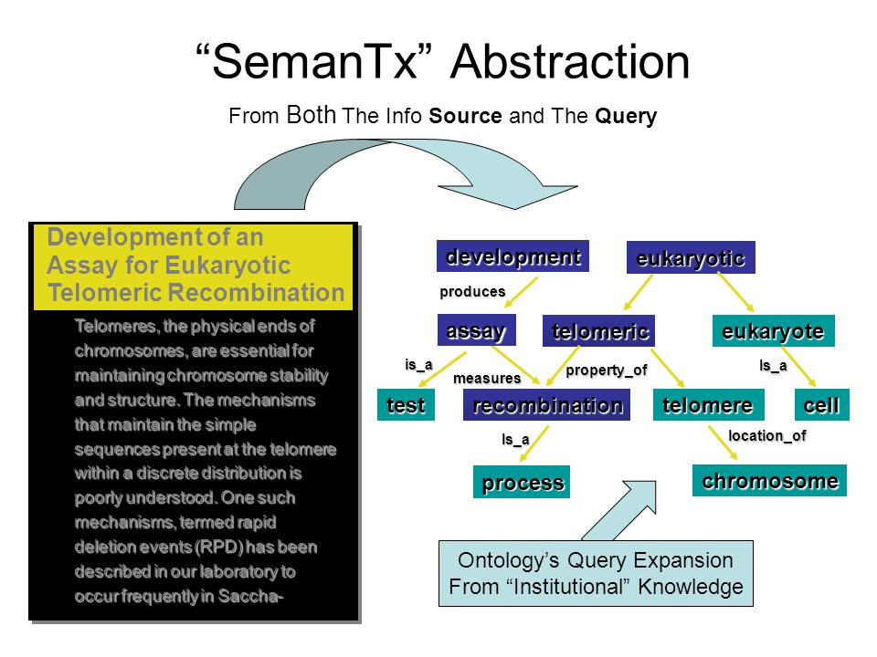 SemanTx Abstraction development test produces is_a measures eukaryotic telomericeukaryote recombinationtelomerecell chromosome process Is_a Is_a property_of location_of Telomeres, the physical ends of chromosomes, are essential for maintaining chromosome stability and structure.