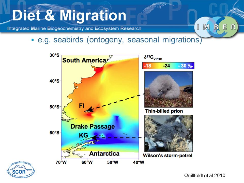 e.g. seabirds (ontogeny, seasonal migrations) Quillfeldt et al 2010 Diet & Migration