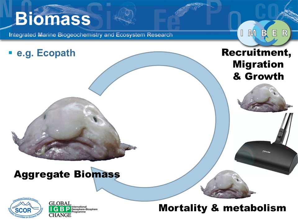 Biomass Aggregate Biomass Recruitment, Migration & Growth Mortality & metabolism e.g. Ecopath