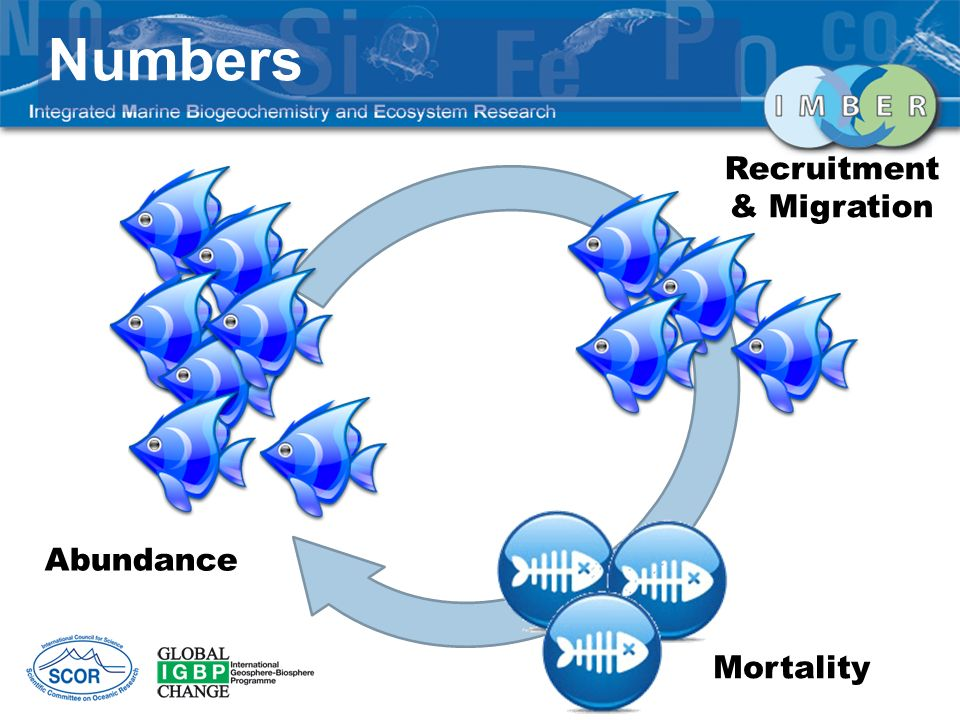 Numbers Abundance Recruitment & Migration Mortality