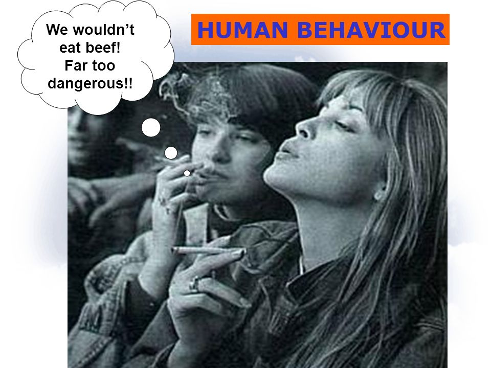 HUMAN BEHAVIOUR We wouldnt eat beef! Far too dangerous!!