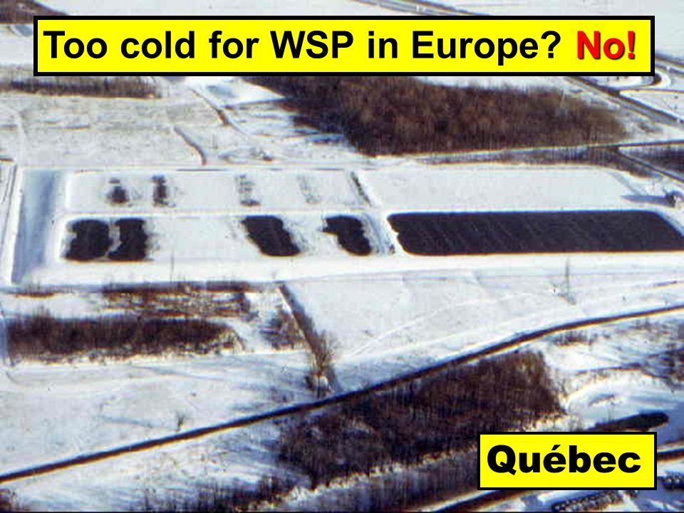 Québec No! Too cold for WSP in Europe No!