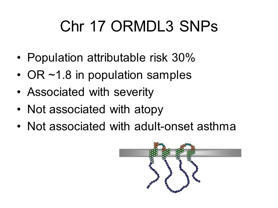Chr 17 ORMDL3 SNPs Population attributable risk 30% OR ~1.8 in population samples Associated with severity Not associated with atopy Not associated with adult-onset asthma